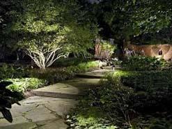 Garden and Tree Lighting