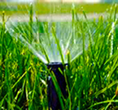 grass sprinkler